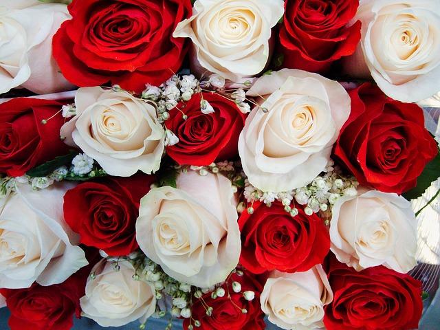 červené a bílé růže