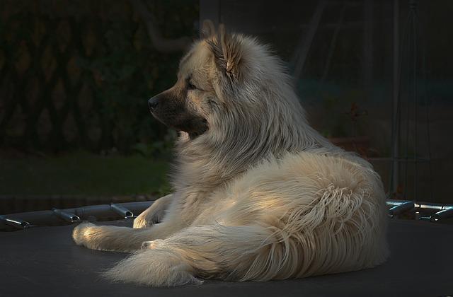 ležící pes na trampolíně