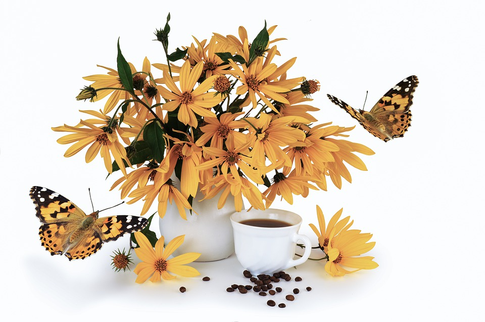 květ topinamburu s motýly